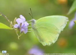 yellow butterfly the symbol of and guidance my s best