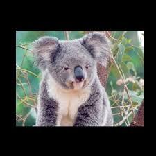 Koala Meme Generator - klueless koala meme generator