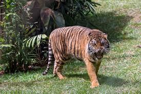 5 unique ways to tour the san diego zoo safari park ync