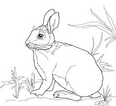 rabbits coloring pages cottontail marsh rabbit coloring page free printable coloring pages