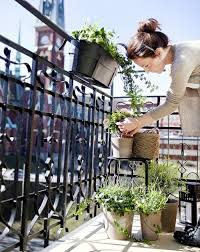 creating a herb garden on the balcony u2013 tips for planting and
