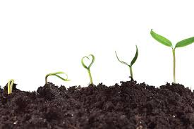 What Is Growth Movement Of A Plant Toward Light Called What Are Plant Growth Hormones