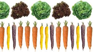 10 best vegetables to grow in a small garden dk explore