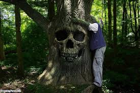 tree hugger pictures freaking news