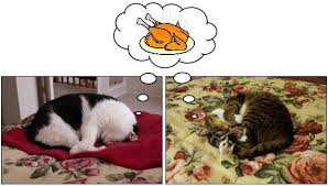 the dangers to pets on thanksgiving the conscious cat