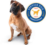 Comfort Dog Certificate Service Dog Certifications