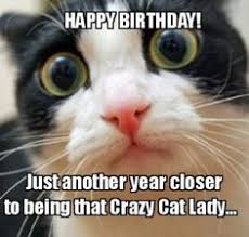 Cat Birthday Memes - witty cat happy birthday meme 2happybirthday cats pinterest