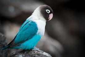 download wallpaper parrot bird color hd background