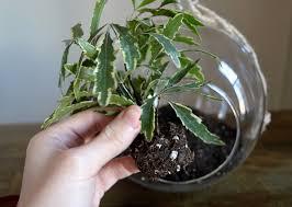 go green with a hip terrarium
