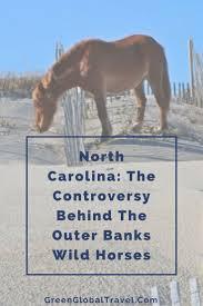 North Carolina global travel images 1579 best wildlife conservation images wildlife jpg