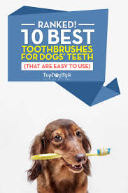 best dog toothbrush huge review of 10 toothbrushes for dogs 2017