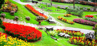 royal gardens of flowers in thailand blossoms of thailand