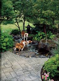 Backyard Landscaping Ideas For Dogs by Backyard Ideas For Dogs Sunset