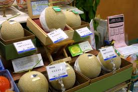 Japanese Gift by Melons The King Of The Gift Fruit The Nice Cantaloupe In The