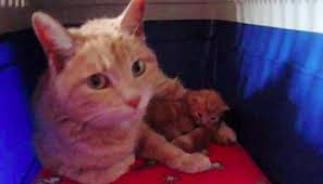 stray cat from burned down house brings her kittens to family for
