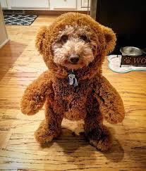 Doggie Costumes Halloween Favorite Pet Halloween Costumes 2015