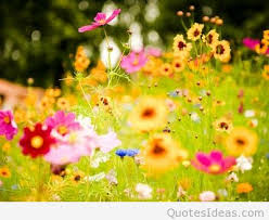 Wallpaper With Flowers Awesome Spring Wallpapers With Flowers