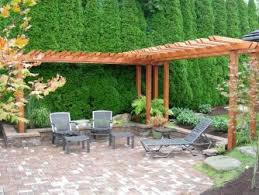 excellent backyard privacy trees contemporary best idea home