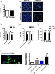 stat3 controls the long term survival and phenotype of repair