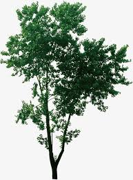 tree tree tree lush tree tree green trees small tree png and psd