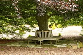 bench around tree free stock photo public domain pictures