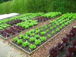 a beginner u0027s guide to vegetable gardens five things to consider