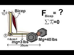physics mechanics torque 5 of 7 the bicep youtube