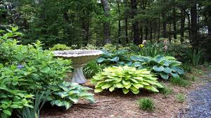 outdoor garden ideas on a budget backyard landscaping with