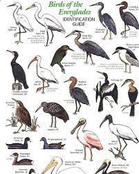 Florida birds images 36 best florida birds images beautiful birds jpg