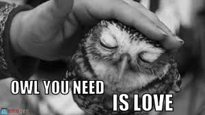 White Owl Meme - owl you need is love owl you need on memegen