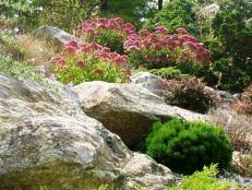 Rocks In Gardens The Best Plants For Rock Gardens Plants For Rocky Soil Hgtv