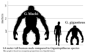 ancient ape gigantopithecus proves king kong can u0027t exist inverse