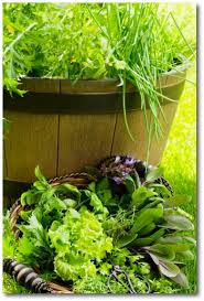 child vegetable garden gardening with kids gardening with children