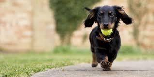 most popular dog breeds akc best dogs 2015