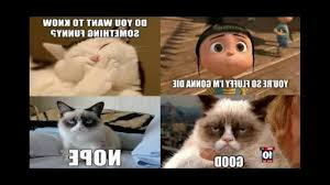 Funny Memes Clean - grumpy funniest grumpy cat memes ever pt 1 youtube photos