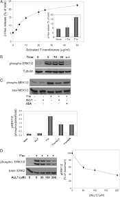 activation of mast cells by trimeric g protein gi3 coupling to