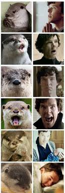 Cumberbatch Otter Meme - lessons learned from the otter meme otter meme photo from