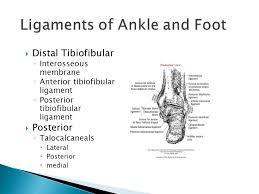 Posterior Inferior Tibiofibular Ligament Esat 3600 Fundamentals Of Athletic Training Ppt Video Online