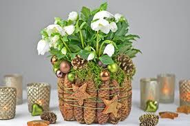 diy christrose dekorieren mit fichtenzapfen moos i tischdeko