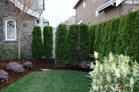 Small Backyard Privacy Ideas Ideas Of Small Trees For Backyard Also Interesting Privacy Trees