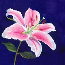 Star Gazer Lily 25 Best Lily Painting Ideas On Pinterest Calla Lillies Calla