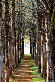 oklahoma forest images Exiting parallel forest wildlife hiking and scenery jpg