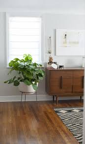 the perfect plant mid century modern pinterest plants