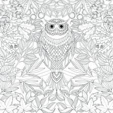 coloring page for adults owl awesome owl coloring pages for adults and owl color pages adult owl
