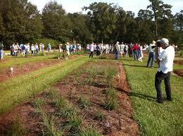 louisiana native plant society louisiana native plant society conference 2016 meadowmaker seed