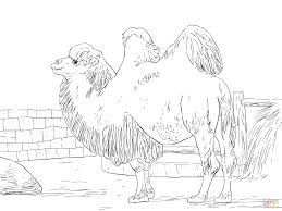 cartoon camel coloring pages realistic free printable