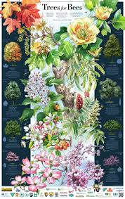 poster 2016 pollinator org trees for beys poster with key
