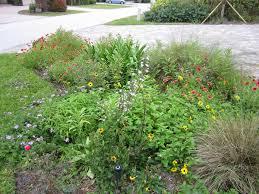 florida native plant landscaping sustainscape florida