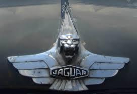 car picture collection jaguar ornament