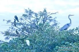 Florida Backyard Birds - backyard wilderness visits wakodahatchee wetlands in florida